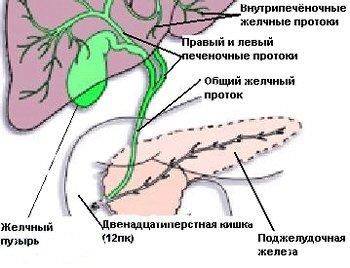 диетолог коновалов