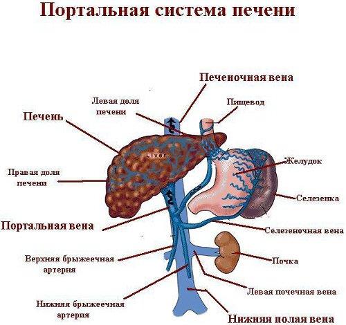 Первичный билиарный цирроз печени